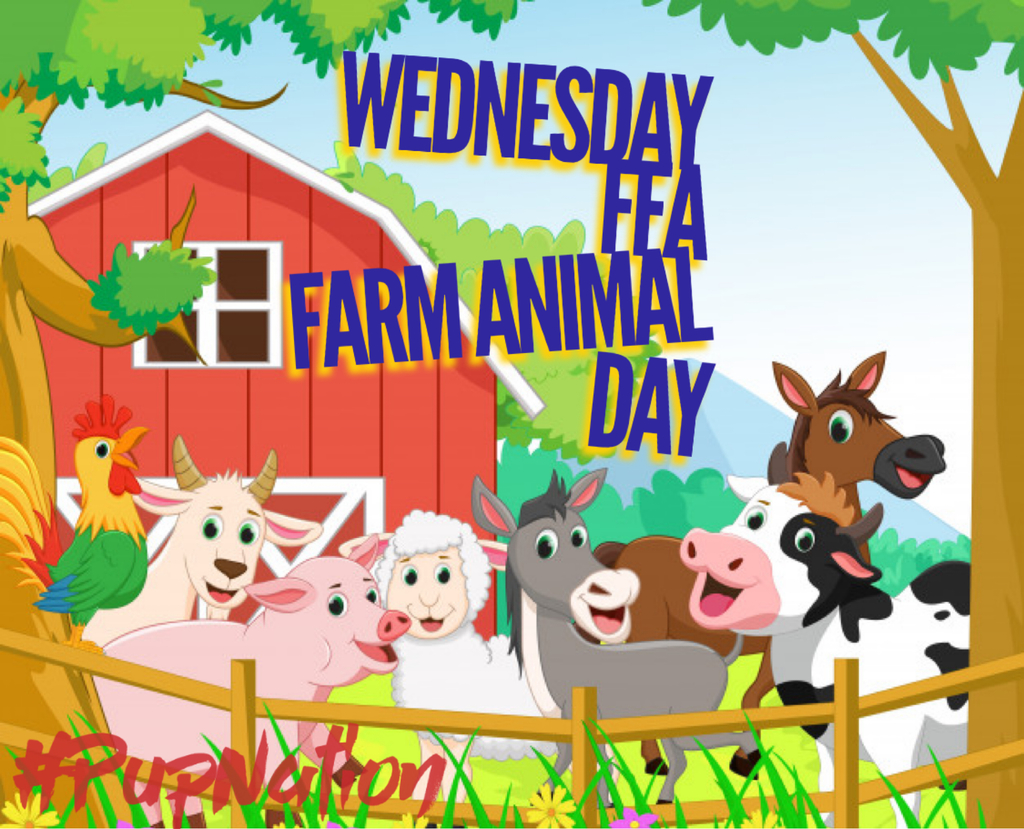 Farm Animal Day